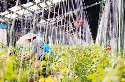 龍潭園藝療癒農場啟用